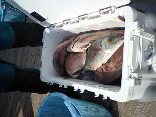 クーラーいっぱいの魚